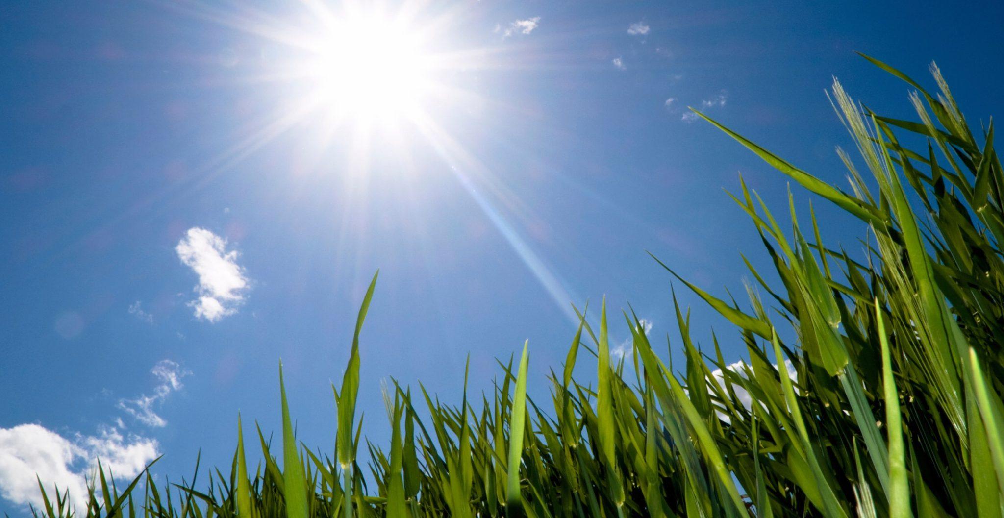 zon vitamine d