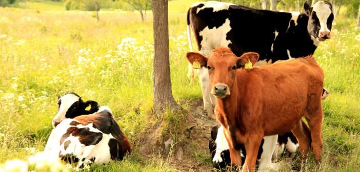 Melk van Rijke Weide