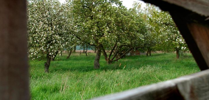 Herenboerderij
