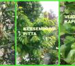 Fruitbomen en Dosha Collage - FB blog