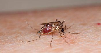 Muggenbeet