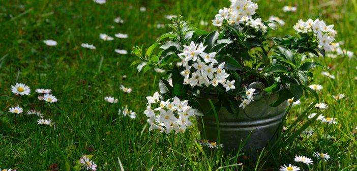 Wat natuurlijke planten voor jouw gezondheid kunnen betekenen