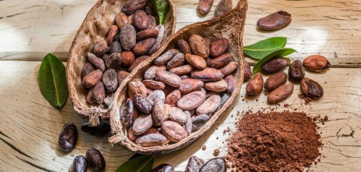 Meer duurzame cacao verwerkt