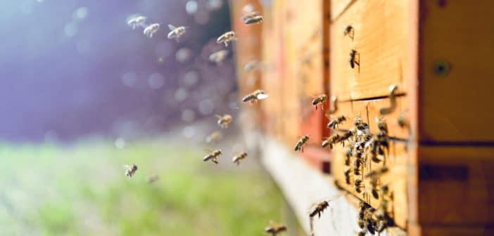 Warm weer, ook voor de bijen