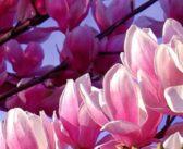 Uitgelicht: Praktijk De Jaspis van Sandra Olde Rikkert in De Lutte