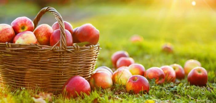 Bio-appels beter voor darmflora en gezondheid!
